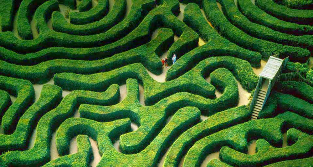 Hedge Maze Longleat House Town Warminster Uk