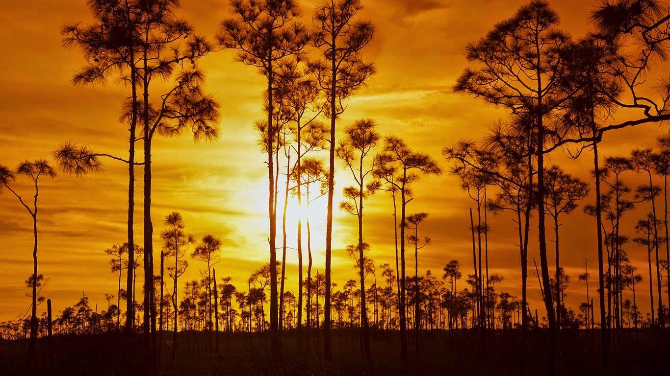 Everglades National Park, Florida (© Angelo Cavalli/Aurora Photos) 414