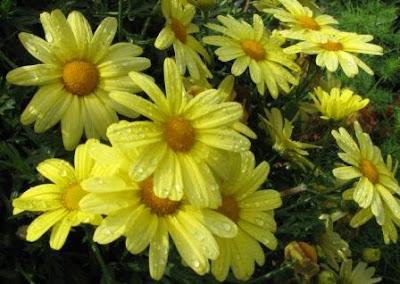 Фото цветов Оксаны Лупич