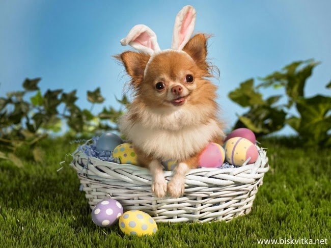 Cute dog in an Easter basket