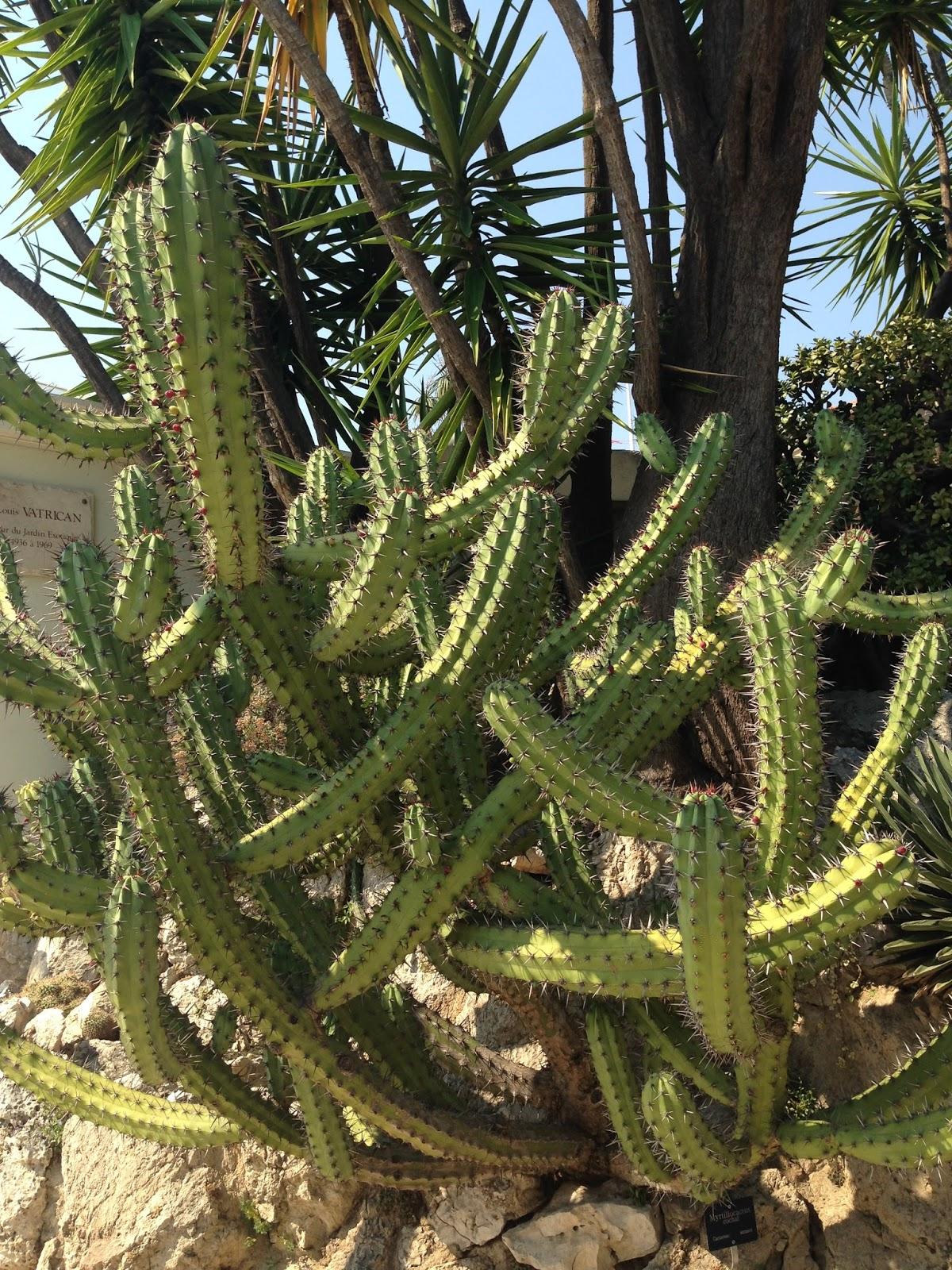 Succulent sundae jardin exotique monaco part 10 for Jardin exotique