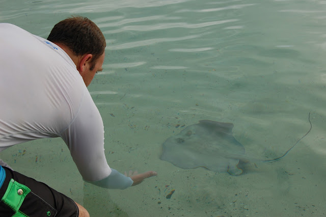 Holding my hand out to a Southern Stingray in shallow water at Francis Bay US Virgin Islands