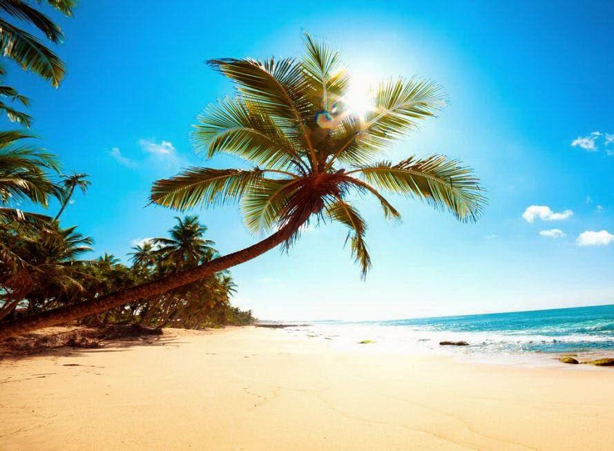 Beautiful Beach Backgrounds Palm Trees Beautiful Palm Tree at Goa