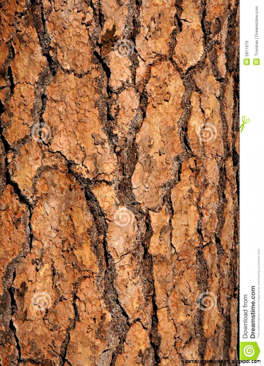 Trunk Close Up Royalty Free Stock Images   Image 5811979