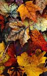 el sonido de las hojas de los árboles al pisarlos...me hace sonreir...
