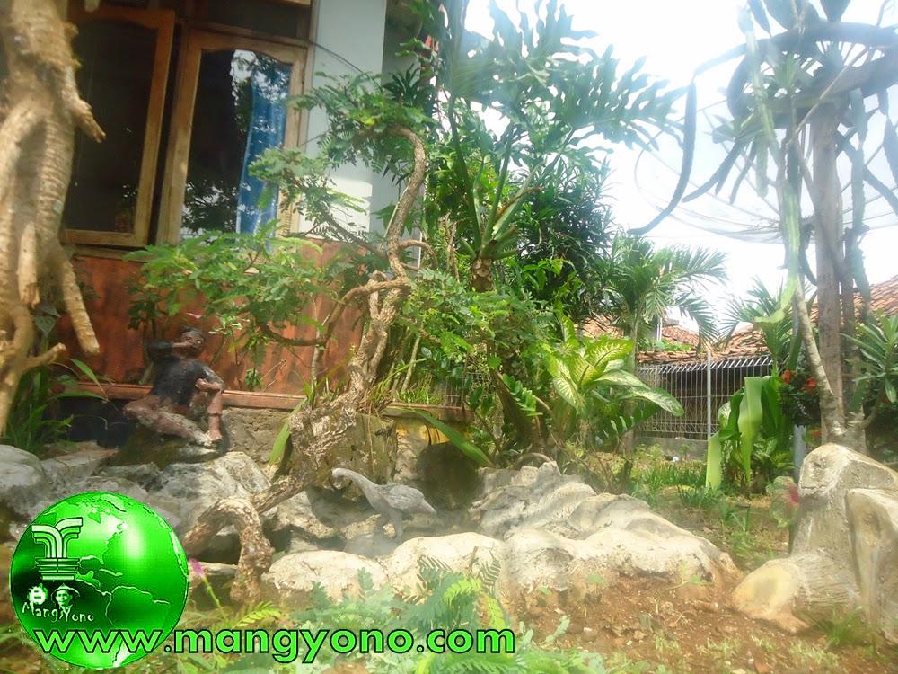 Dan ini hasil dari pemangkasan pemangkasan pemeliharaan Bonsai Asem Jawa saya