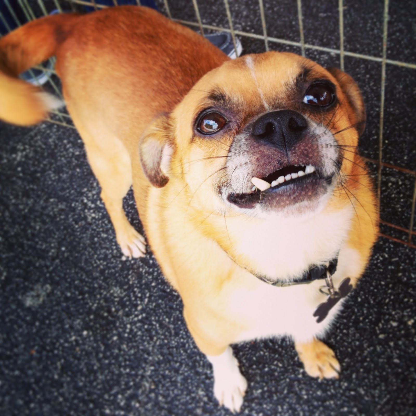 Bliss is a member of the Walton Animal Guild. Please click here for ...
