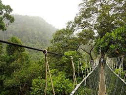 Jungle Trekking-Canopy Walkway