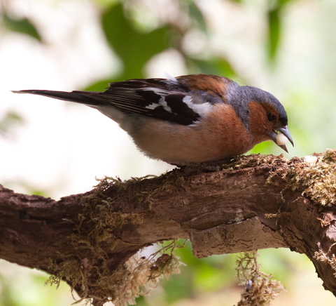 birds pictures, Common garden birds pictures, British garden birds ...  Birds