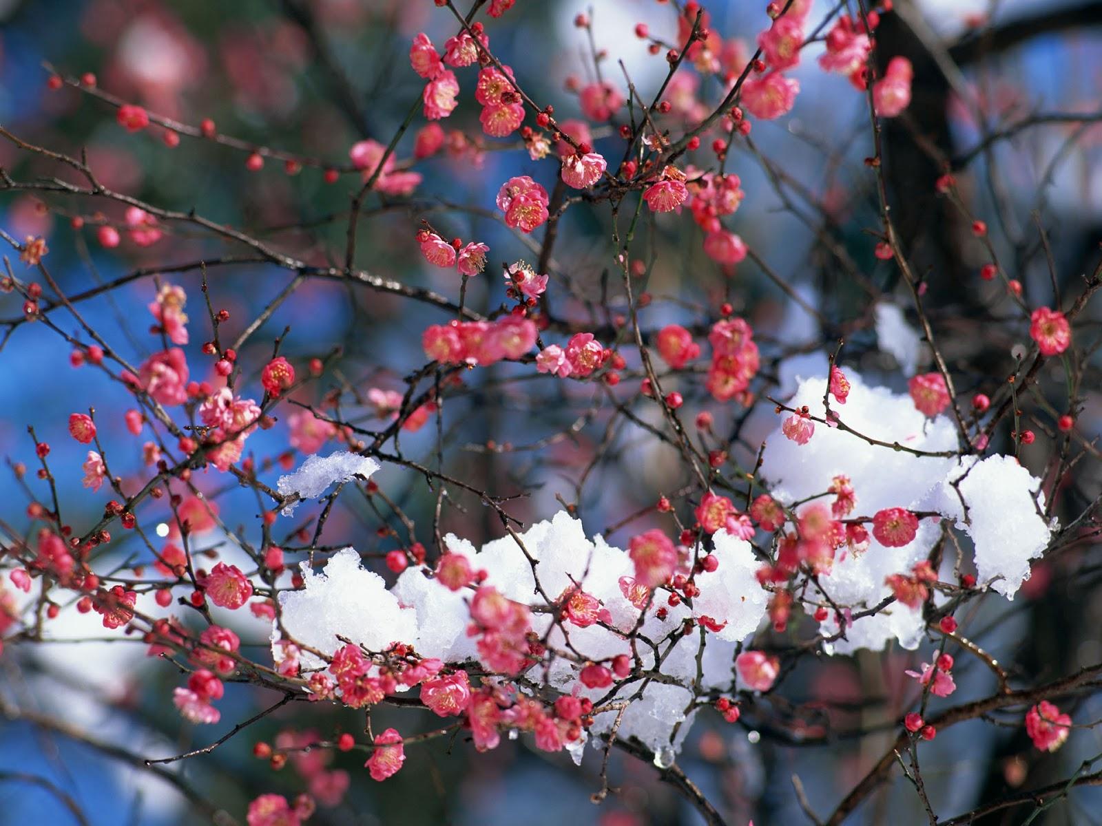 Il meraviglioso mondo di franciul fiori rosa fiori di for Immagini primavera desktop