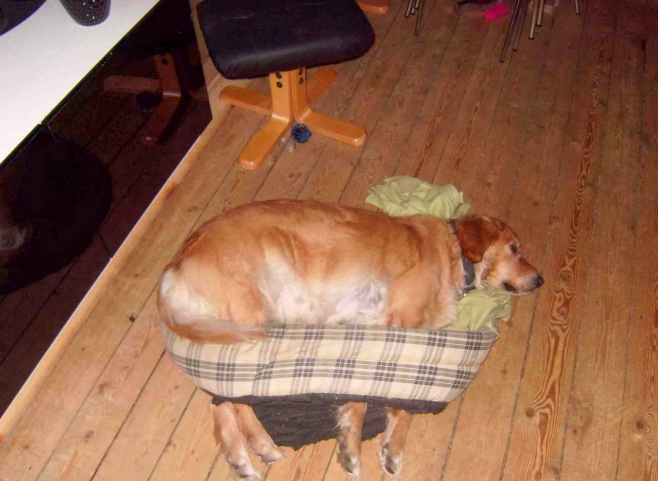 Cute dogs - part 7 (50 pics), dog tries to sleep in his broken bed