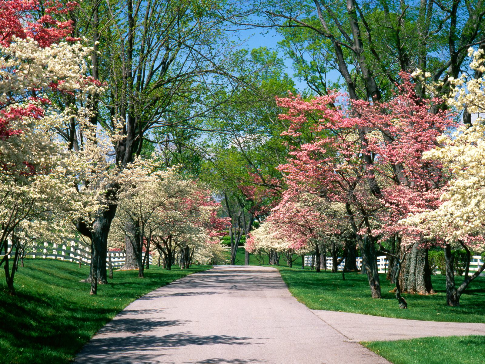 http://3.bp.blogspot.com/-WHxleRFNBCU/TaJxD89-knI/AAAAAAAAANM/66FFUbL6q9c/s1600/Pink_and_White_Dogwood_Trees_Lexington_Kentucky.jpg