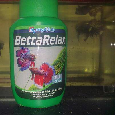 July 2012 rocky betta for Betta fish water temp