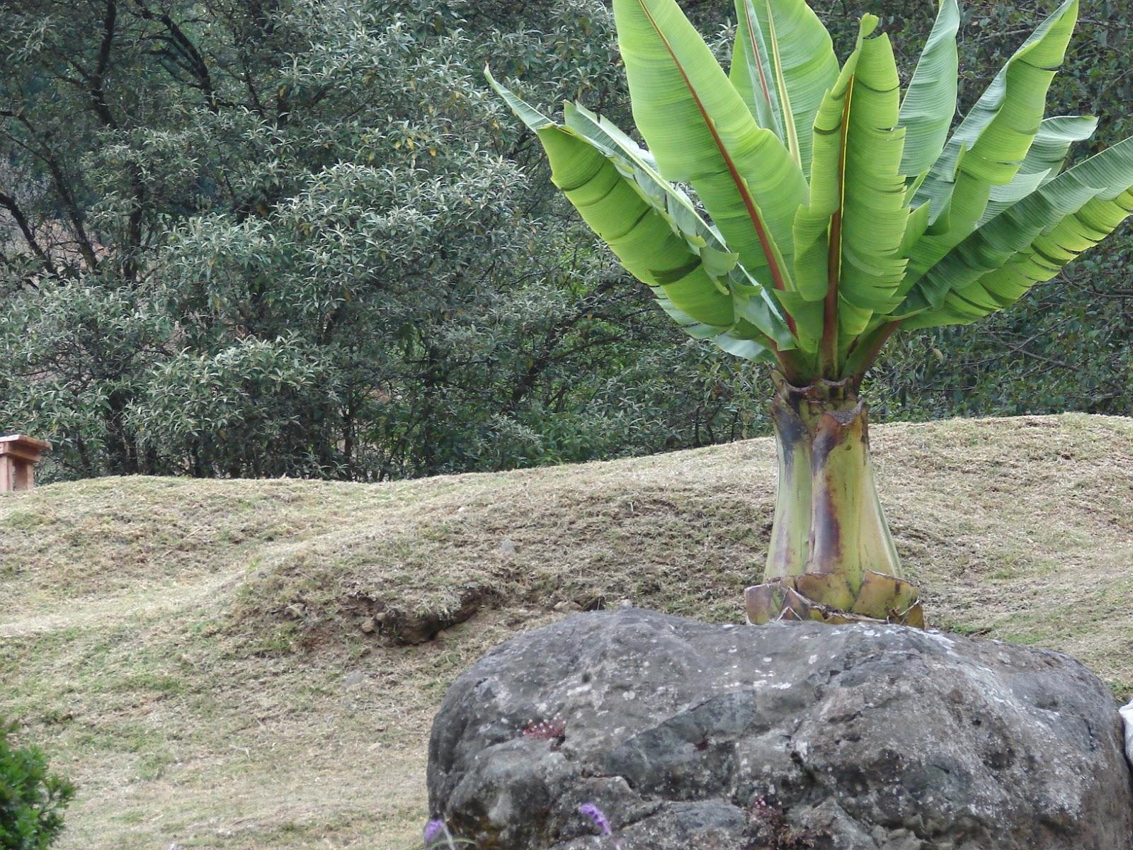 significado de plantas ornamentales paisajismo pueblos y jardines plantas ornamentales