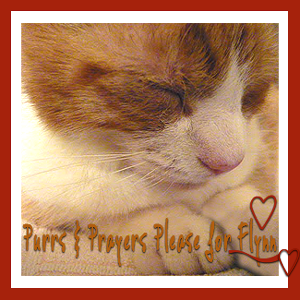 Our Buddy Flynn needs purrs and prayers