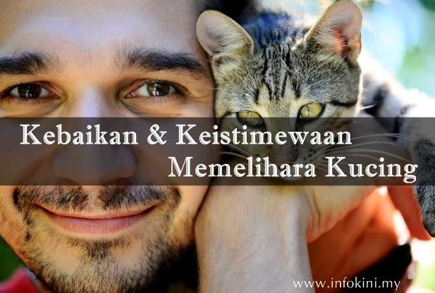 Kebaikan-Kelebihan-keistimewaan-memelihara-kucing