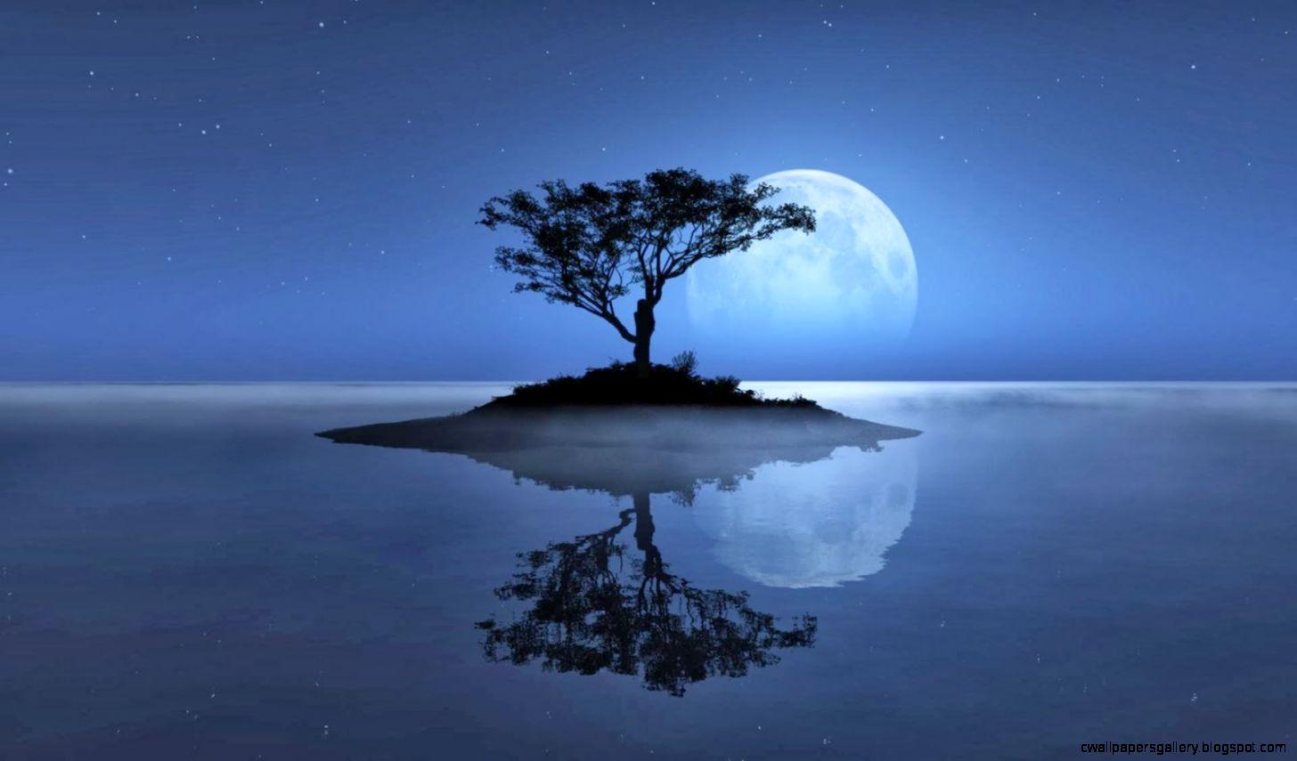 Full Moon Night Nature Wallpaper   1600X900 IWallHD   Wallpaper HD