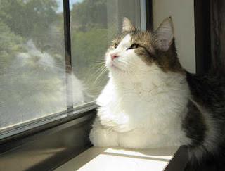 oscar cat