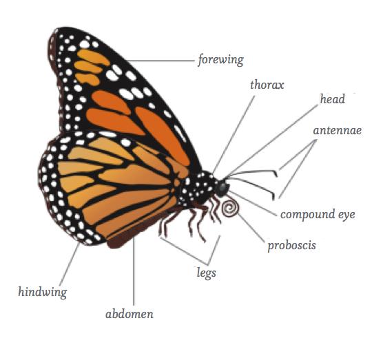 Tropical Rainforest  Butterflies  Moths And Pollination