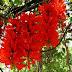 Kabupaten Yalimo Miliki Bunga Api Raksasa Molangken