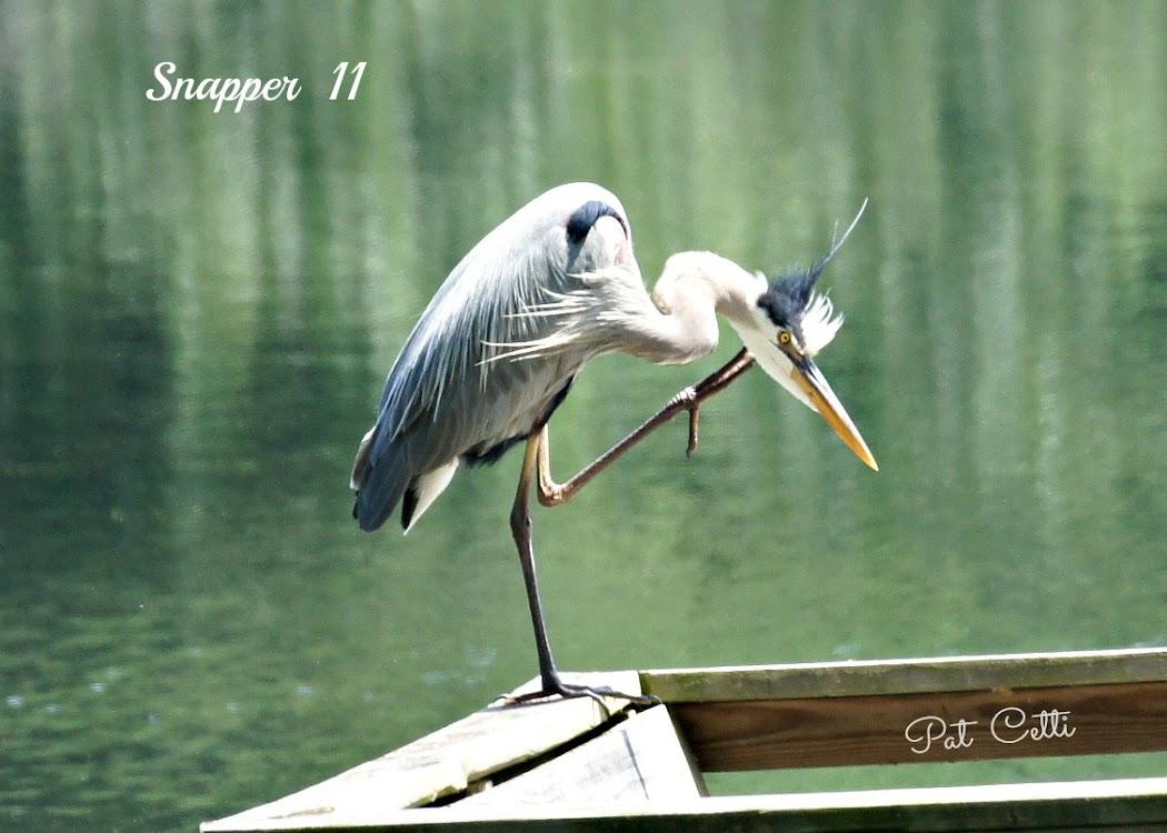 Snapper II