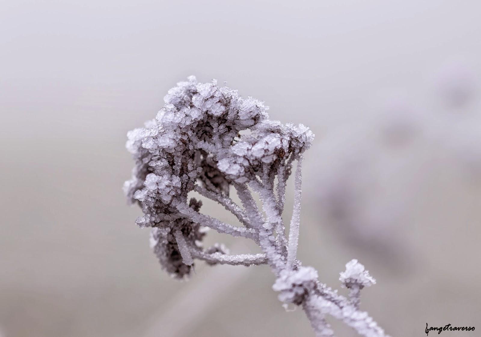 Nature en Haute-Savoie. Gelée matinale en janvier 2015