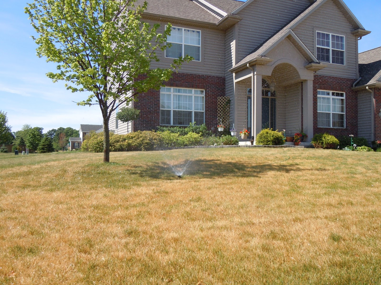 Dry Lawn with Irrigation System
