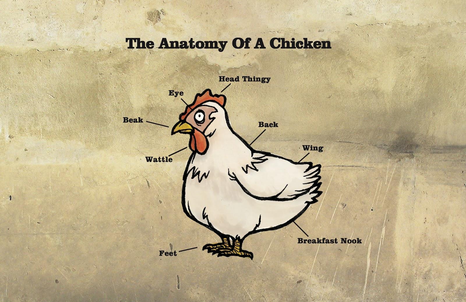 The Drawbridge: CHICKEN ANATOMY