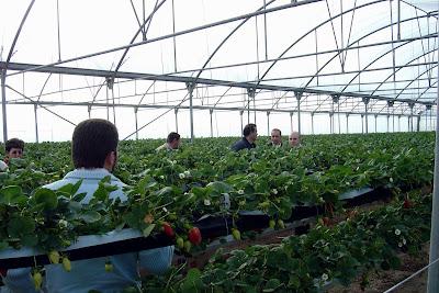Thm tecnolog as de la horticultura mediterr nea un for Vivero estructura