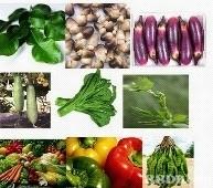 Bisnis Supplier Sayuran organik Balikpapan Samarinda Bontang Sangat Menjanjikan