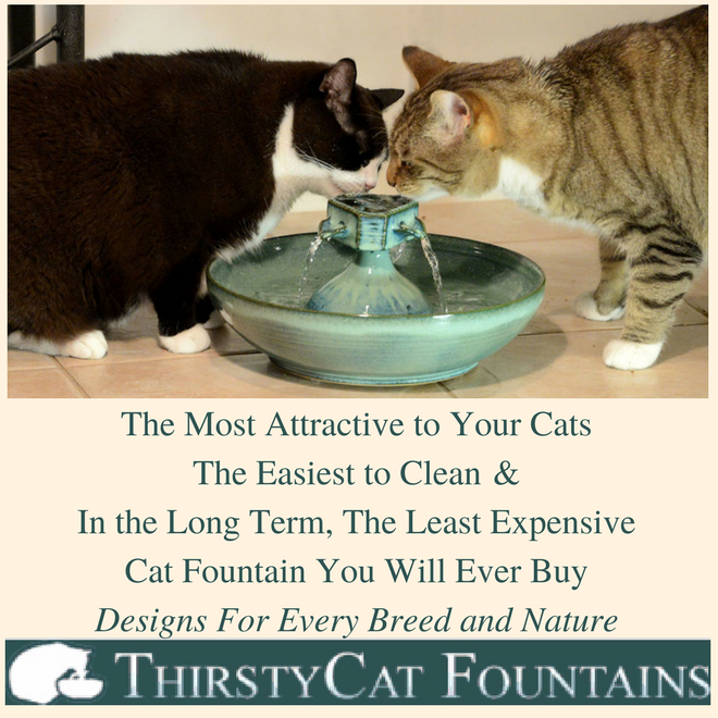 Thirsty Cat Fountains