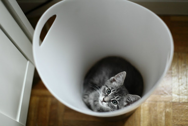 Funny cat pictures part 14, cat in trash bin