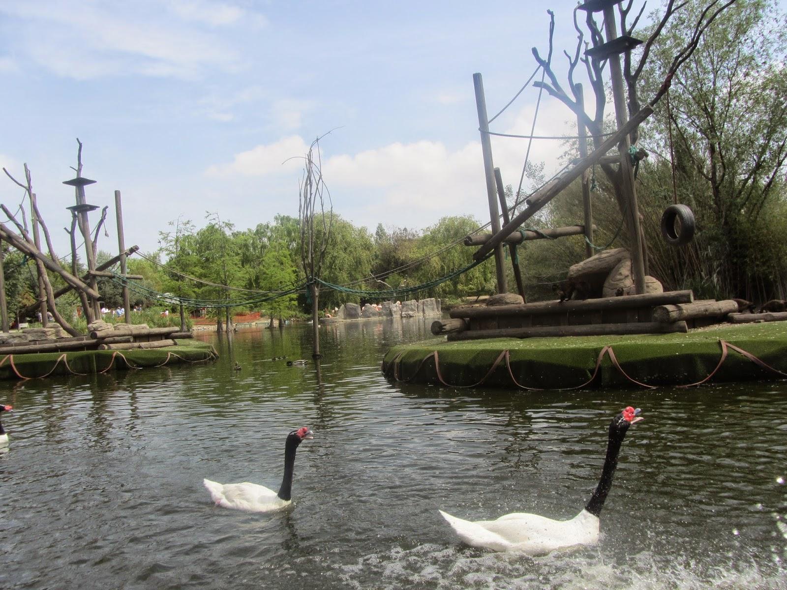 Lago Principal de Faunia, dónde podrás relajarte y disfrutar de la naturaleza.