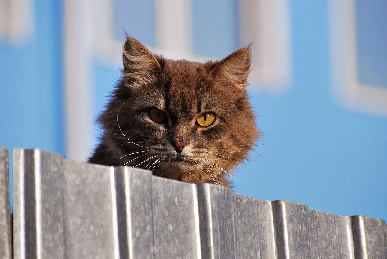 Коты в Лысьве