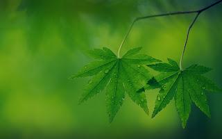 Two Green Leaves Raindrops Macro Photography Effect HD Wallpaper