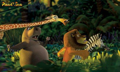 Cuộc Phiêu Lưu Tới Madagascar 1349543467