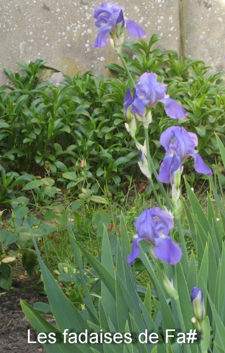 Les fadaises de fa mon jardin de campagne for Derriere les murs de mon jardin