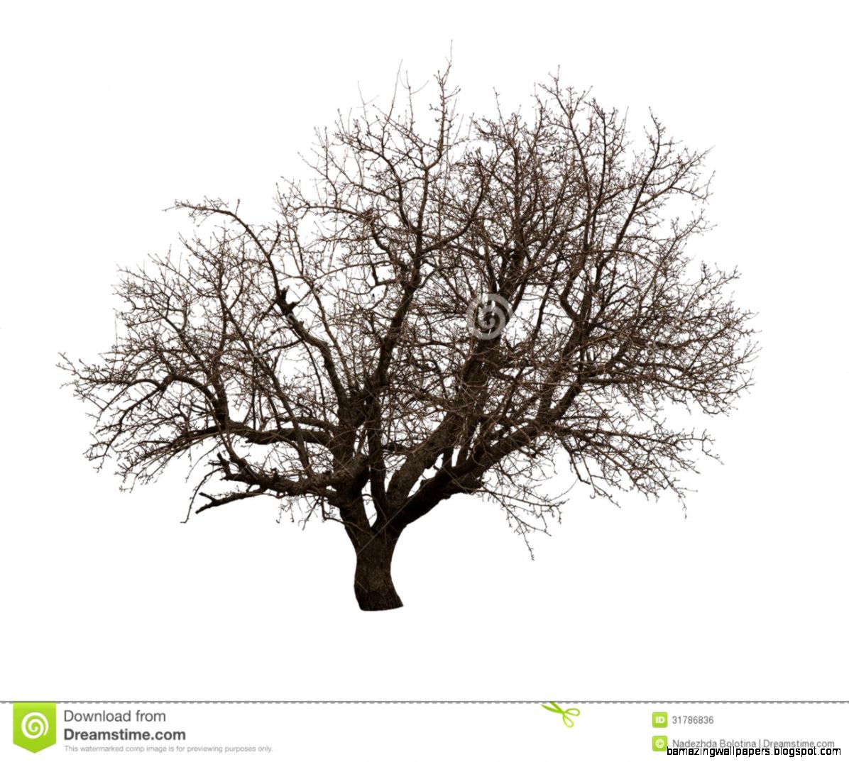 Bare Tree Isolated Over White Royalty Free Stock Image   Image