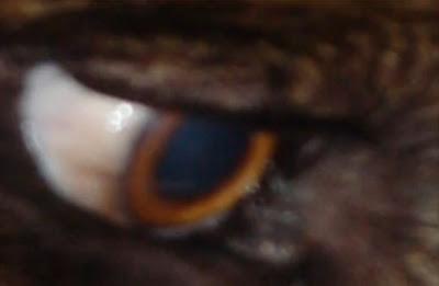 ojo de una misteriosa criatura