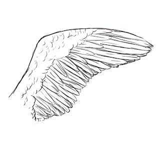 AdamDrawsStuff • How To Draw Wings