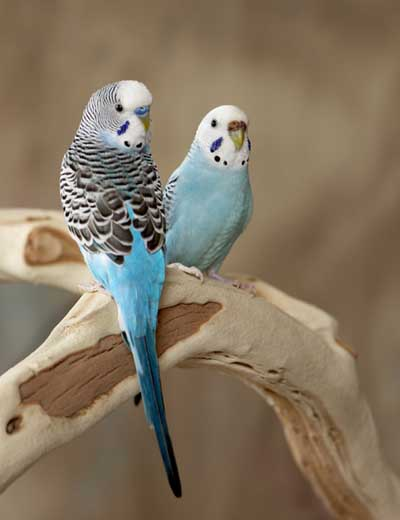 Most Popular Best Pets In The World - Birds