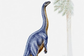 """How did the dinosaurs have actually moved paleontologists no longer work with shovel and brush, but also with drones, scanners and lasers. In computer you then run as a digital 3-D models by stitching dinosaurs. 0 From Birk grueling  Could Plateosaurus on its hind legs stand? Such questions go researcher with modern technology to Photo: Getty Images Could Plateosaurus on its hind legs stand? Such questions go researcher with modern technology to Jurassic Park before the tragic incident. Amazement watching the visitors a huge Brachiosaurus grazing. In order to supply the more than 20-ton body with sufficient energy, the long-necked herbivores slipped kilos of greens. In Hollywood blockbusters, the Brachiosaurus is even on their hind legs to reach juicy treetops.  Fiction for an impressive screen scene? This question is followed by Heinrich Mallison Berlin Museum of Natural History and although using modern computer simulations. """"We use similar methods as engineers in the automotive industry. Using simulations, we can have different loads on the body calculate fairly accurately,"""" he explains.  The result at the Brachiosaurus: The strain on the hip joints would when getting up on the columnar hind legs quite large, however, the height advantage was rather modest. Only four feet wins the long-necked by his balancing act. For smaller relatives such as the Diplodocus the loads significantly lower and also the size of profit with eight meters would be higher.  """"Hollywood has probably picked the wrong long-necked dinosaur for erecting"""" says Mallison. Whether the smaller Diplodocus now actually set to eat or to mate on their hind legs, we do not know of course, adds to the paleontologist. But it was possible in theory.  Modern technology saves time and money  Jurassic World Trailer Dinosaurs in """"Jurassic World"""" out of control Paleontology has long been a digitized science. In addition to shovel and brush today include laser scanners, CAD programs and drones to tools for the """