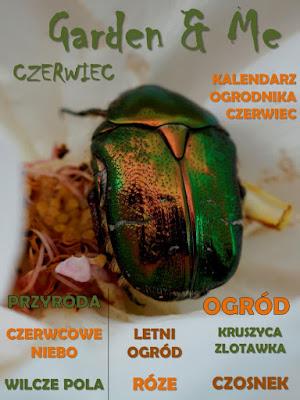 http://issuu.com/wilczagora/docs/garden___me_6