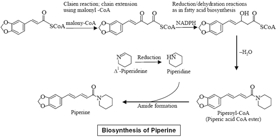 Biosynthesis of Piperine
