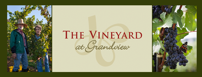 The Vineyard at Grandview