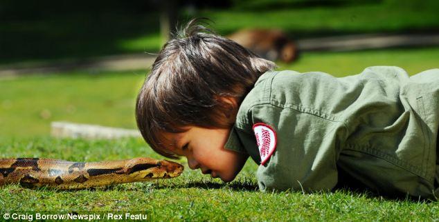 El niño pequeño encantador de serpientes de Australia