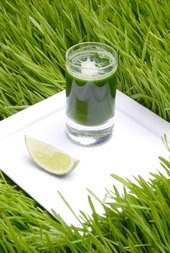 The French Tangerine Wheatgrass