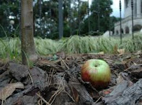 La manzana de Newton. O por lo menos, una emparentada.