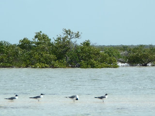 fly fishing, seagull, bahamas