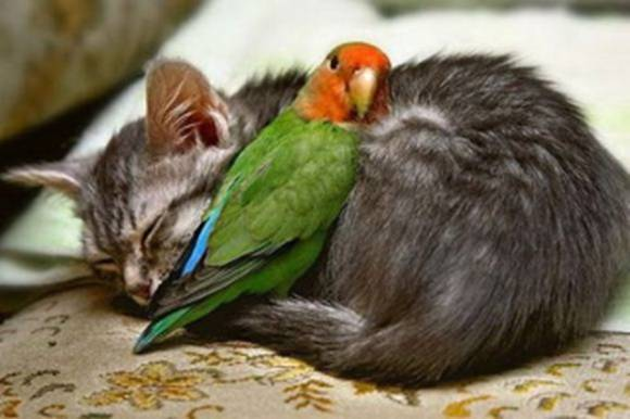 Animals Friendship Pictures